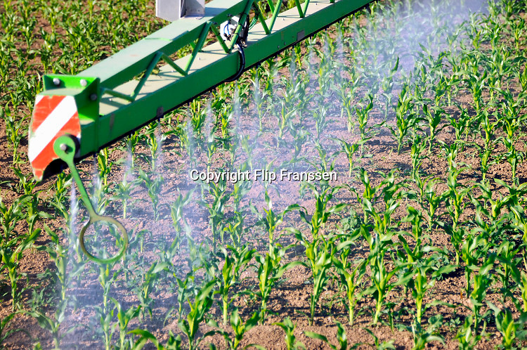 Nederland, Ooijpolder, 19-5-2020 Een loonbedrijf bespuit jonge mais, maisplantjes in een maisveld met een bestrijdingsmiddel tegen insecten, ziekten,onkruid of schimmels. Foto: Flip Franssen