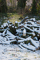 Tree logs after Snow fall in North Surrey England UK