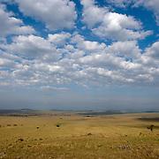 Masai Mara National Reserve, Kenya, Africa