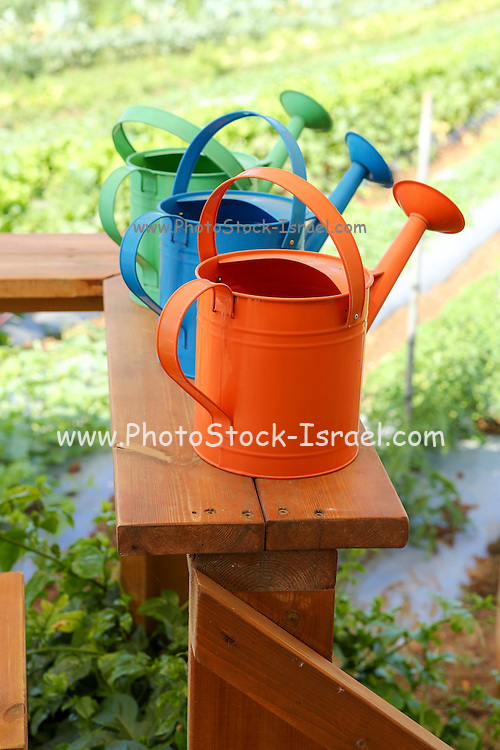 Watering cans at a small Organic vegetable patch