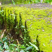 THA/Bangkok/20160729 - Vakantie Thailand 2016 Bangkok, met groene mos beklede trap