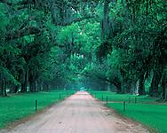 Road, Boone Hall Plantation and Gardens an antebellum plantation, Mount Pleasant, South Carolina near Charleston