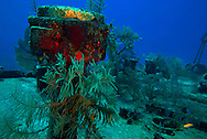 On Deck, Oro Verde shipwreck, Grand Cayman