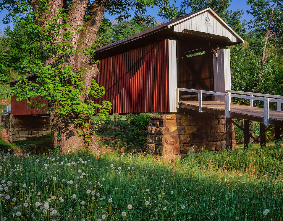 Rinard Covered Bridge, built 1875,w/ silver maple tree, Rinard Mills, OH