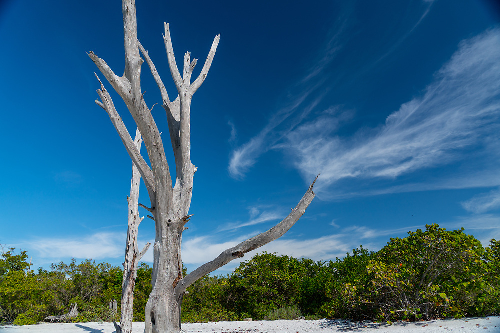 The remains of trees stand in the sand on a Florida beach. Photo by Adel B. Korkor.