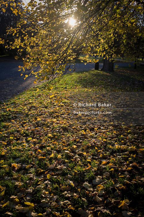 Fallen yellow autumn leaves in Dulwich Park, London borough of Southwark.
