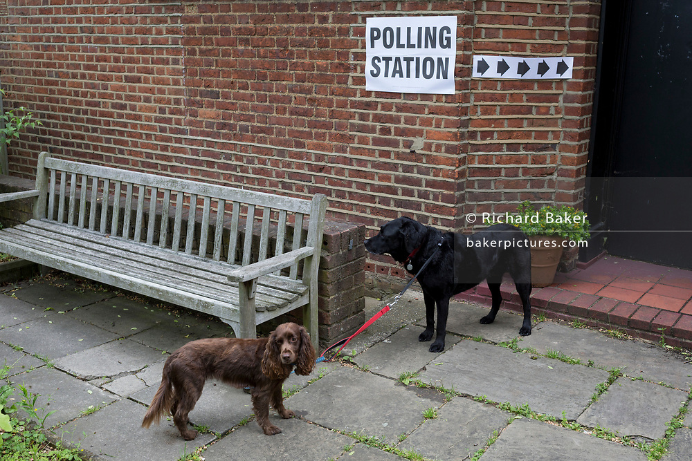 Pet dogs await their voting owners for the UK 2017 general elections outside the polling station at St. Barnabas Parish Hall in Dulwich Village  on 8th June 2017, in London, England.