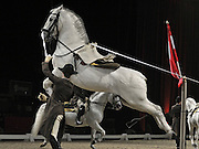 "© Licensed to London News Pictures. 23/11/2011, London, UK. The spanish The Spanish Riding School of Vienna and their white Lipizzaner stallions rehearse their show. It is five years since the highly trained horses and riders of the 430 year old ""High School for Classical Horsemanship"" have graced the halls of the UK. They're back with the show entitled ""Imperial Dream"" at Wembley Arena from 24th November 2011. Photo credit : Stephen Simpson/LNP"