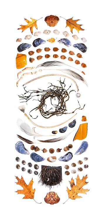 top to bottom:<br /> bottle cap liner<br /> plastic lobster fork<br /> rubber ring<br /> Common Periwinkle (Littorina littorea)<br /> Rockweed (Ascophyllum nodosum)<br /> Fishing industry tag<br /> Blue Mussels (Mytilus edulis)<br /> plastic tubing, ceramic plate fragment<br /> oysters, Dale's Pale Ale aluminum can (Colorado)<br /> plastic lobster forks<br /> plastic knife and fork<br /> sea glass bottle neck, stainless steel spoon, polyethylene lobster trap rope<br /> crayon, plastic dental flosser, crayon, plastic nut bag label, crayon, china fragment, sea glass<br /> plastic cocktail sword, crayon, rubber lobster claw band, crayon, plastic thing (maybe a collar stay?)<br /> plastic lobster forks, Common Periwinkle<br /> red plastic (possibly from a taillight), crayon, aluminum bottle cap, sea glass, crab, sea glass, crayons