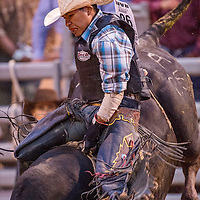 071313       Cable Hoover<br /> <br /> Tustin Daye grapples with his bull during the Wild Thing bull riding competition at Red Rock Park in Gallup Saturday.