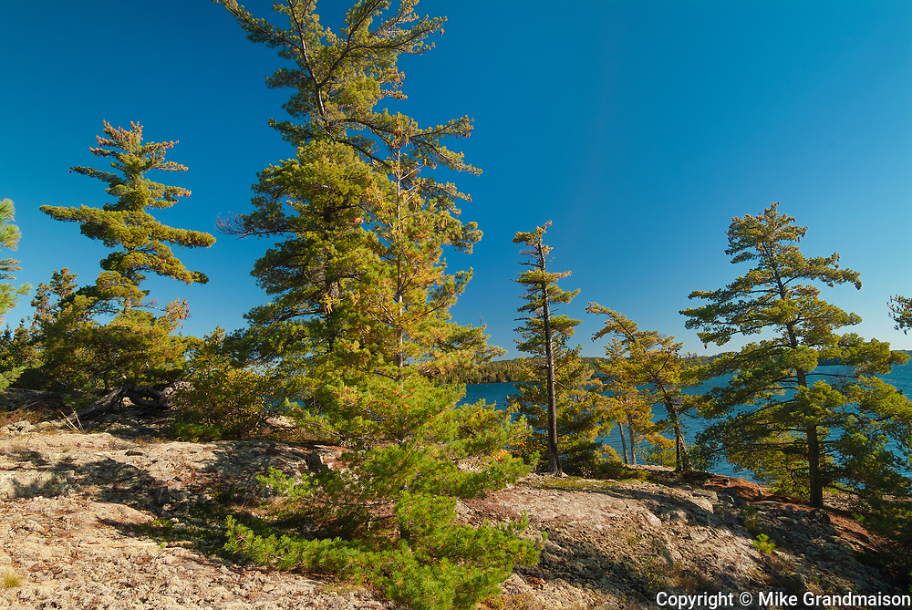 White pines on rocky shoreline of Crow (Kakagi) Lake in Unorganized Kenora District and the township of Sioux Narrows-Nestor Falls<br />North of Nestor Falls<br />Ontario<br />Canada