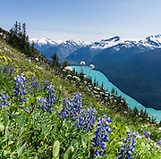 From the High Note Trail on Whistler Mountain, admire turquoise Cheakamus Lake and glacier-clad peaks in Garibaldi Provincial Park, in the Coast Range, British Columbia, Canada. The beautiful lake is colored by glacial silt reflecting reflecting green and blue sunlight. This panorama was stitched from 3 overlapping photos.