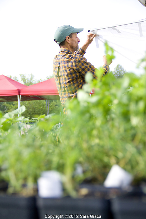George Remington of Morningside Farm prepares for a day at the Howe Meadow Farmers Market.