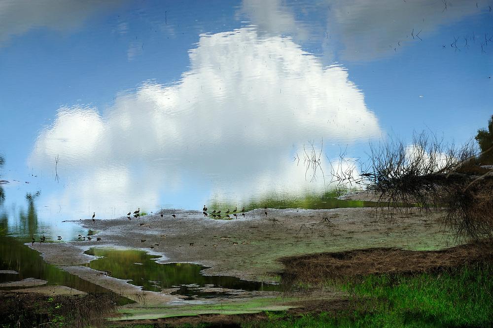 El cielo puede esperar / pato silbador / Parque Nacional Camino de Cruces, Panamá.<br /> <br /> Género fotográfico: Pictorialismo.<br /> <br /> The sky can wait / black bellied whistling duck / Camino de Cruces National Park, Panama.<br /> <br /> Photographic genre: Pictorialism.<br /> <br /> Edición de 10 | Víctor Santamaría.
