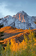 Mt. Morrison above Slopes, Cottonwood and Aspen, Inyo National Forest, Mono County, Caifornia