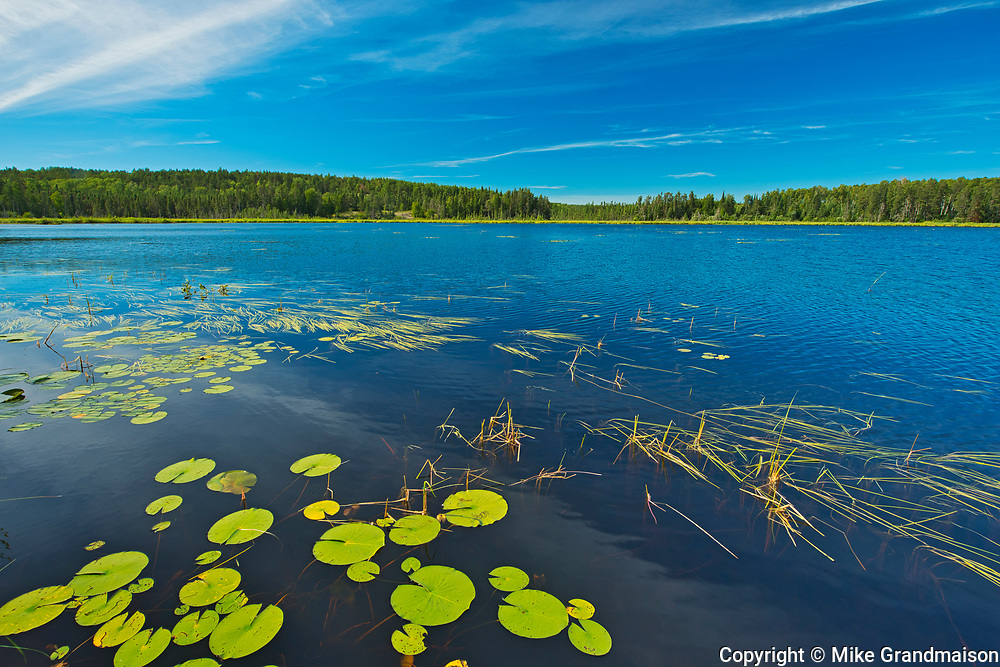 Water lilies on Old Woman Lake<br />Near Sioux Narrows<br />Ontario<br />Canada