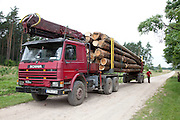 Semi truck hauling a load of logs along a Polish dirt road. Zawady Central Poland