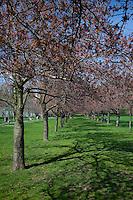 Brooklyn Botanical Garden