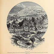 Olive Trees in Wady El-Jib from the book Picturesque Palestine, Sinai, and Egypt By  Colonel Wilson, Charles William, Sir, 1836-1905. Published in New York by D. Appleton and Company in 1881  with engravings in steel and wood from original Drawings by Harry Fenn and J. D. Woodward Volume 1