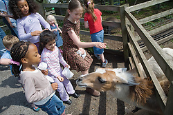 Children feeding a lama on a visit to a city farm,