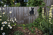 A black cat stencil by a street artist dubbed Catsy by local residents is pictured on 8th June 2021 in Wokingham, United Kingdom. This stencil was appreciated so much by its owners that it was fixed to a replacement fence following storm damage. There are believed to be around 30-40 such black cat stencils sprayed around Wokingham by the anonymous street artist.