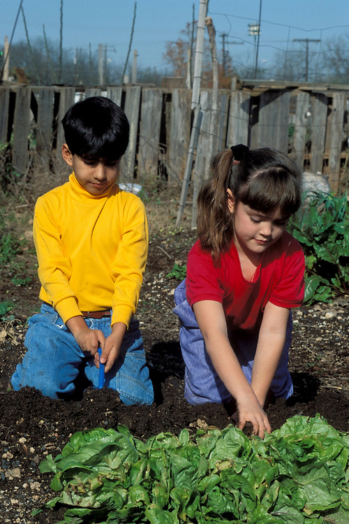 Hispanic boy and Anglo girl dig in family garden under adult supervision.<br /> ©Bob Daemmrich/
