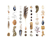 Top to botton, left to right: By-the-Wind Sailor (Vellela vellela), Mole Crab (Emerita analoga), Pacific Sanddollars (Dendraster excentricus), feather, sedimentary beach stone with holes tunneled by Piddock Clams (Penitella penita), California Mussel (Mytilus californianus), seagrass, Dungeness Crab (Metacarcinus magister), sedimentary beach stone with piddock holes, Pacific Sand Dollars, striped beach stones, Vellela, California Mussel, feather, Mole Crab, Shield Limpet (Lottia pelta), unidentified nut, unidentified snail, Bay Mussels (Mytilus trossulus), driftwood, striped beach stones, stone with piddock tunnels, Vellela, unidentified snail, Sand Dollar, seaweed (prob. Ceramium sp.), Black Turban Snail (Chlorostoma funebralis), clam (poss. Macoma sp.), part of an unidentified shell, mole crab, California Mussel, beach stone, beach stone with piddock holes.
