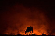 Chapada Gaucha_MG, 01 de Outubro de 2007.<br /> <br /> Projeto Beira de Estrada<br /> <br /> Rota Norte e Noroeste de Minas <br /> <br /> Na foto, incendio provocado por agricultores.<br /> <br /> Foto: LEO DRUMOND / NITRO