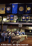 Pennsylvania Farm Show, Harrisburg, PA, Sheep Judging
