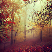 Colourful autumn forest on a misty day - photograph processed with texture overlays