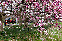 Central Park in back of the Metropolitan Museum.