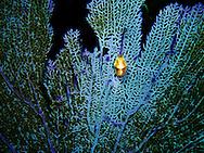 Bahamas underwater reef