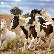 Free-roaming horses in Placitas, New Mexico