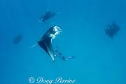 manta researcher Guy Stevens takes photos of unique individual markings used to identify manta rays, Manta alfredi (formerly Manta birostris ) that are feeding on plankton in Hanifaru Bay, Baa Atoll, Maldives ( Indian Ocean )