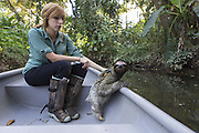 """Brown-throated Three-toed Sloth <br /> Bradypus variegatus<br /> Rebecca Cliff, sloth biologist, with sloth wearing """"sloth backpack"""" riding in boat to release site<br /> Aviarios Sloth Sanctuary, Costa Rica<br /> *Model release available"""