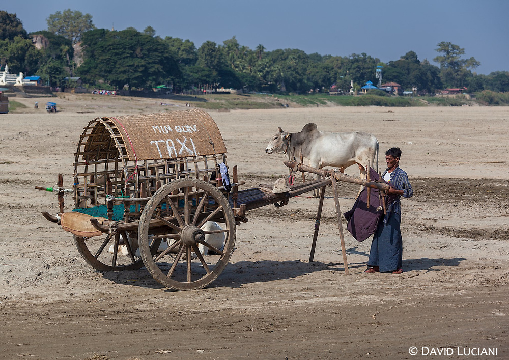 A cow carriage taxi in Mingun, waiting for tourists to bring them to the sightseeings.