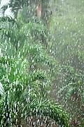 Heavy Rainfall in jungle, Panama, Central America, Gamboa Reserve, Parque Nacional Soberania