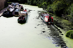 © Licensed to London News Pictures. 03/08/2019. London, UK. Boats passes on Regents Canal which is covered in green Algae. Recent high temperatures in London has caused an increase of the Algae in rivers and canals. Photo credit: Dinendra Haria/LNP