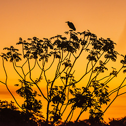 """Pôr do Sol no Pantanal (Paisagem) fotografado em Corumbá, Mato Grosso do Sul. Bioma Pantanal. Registro feito em 2017.<br /> <br /> <br /> <br /> ENGLISH: Pantanal Sunset photographed in Corumbá, Mato Grosso do Sul. Pantanal Biome. Picture made in 2017."""