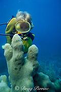 diver and pillar coral, Dendrogyra cylindrus, Key West, Florida Keys ( Western Atlantic Ocean ) Florida Keys National Marine Sanctuary MR 73