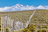 ESTEPA Y ALAMBRADO, RUTA 150 CAMINO A DIQUE AGUA DEL TORO, CORDILLERA DE LOS ANDES CON NIEVE AL FONDO, SAN RAFAEL, PROVINCIA DE MENDOZA, ARGENTINA  (PHOTO © MARCO GUOLI - ALL RIGHTS RESERVED)