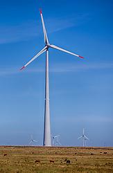 Complexo Eólico Cerro Chato, em Santana do Livramento, na região da fronteira com o Uruguai conta com 45 aerogeradores em funcionamento e tem capacidade de geração de energia estimada em 300 gigawatts-hora (GWh). FOTO: Jefferson Bernardes/Preview.com