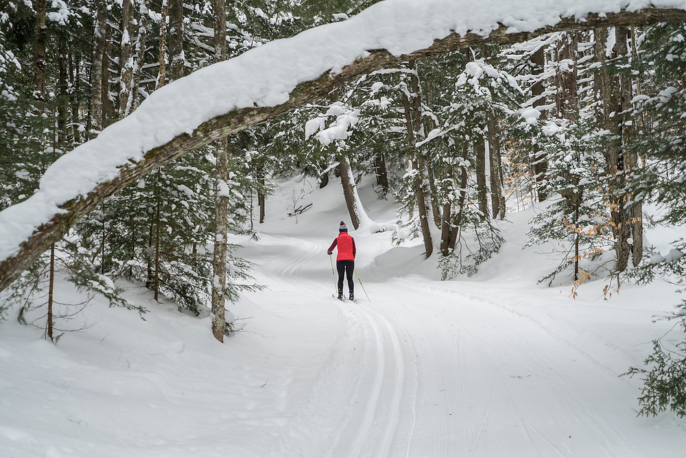 Cross-country skiing in Michigan.