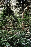 Bounty Hunter Mike Rocha, photographed in woods near his Everett WA home.