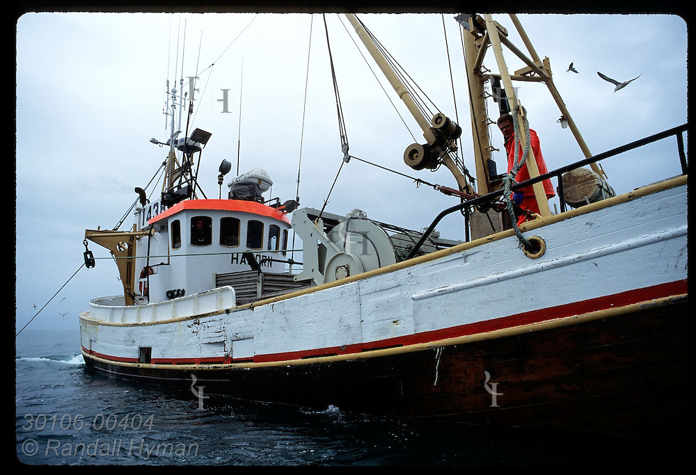 Gillnet boat looms large as it fishes for flounder in Faxafloi Bay in July. Iceland