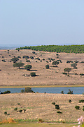 dry fields with oak trees herdade do esporao alentejo portugal