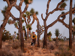 August 4, 2017 - Joshua Tree National Park Search and Rescue volunteer, ALICE WALTERMIRE, searches the hills with her search dog for two missing hikers in the late evening in Joshua Tree National Park. California State University Fullerton students, Rachel Nguyen and Joseph Orbeso have been missing for two weeks in the park. (Credit Image: © Steven K. Doi via ZUMA Wire)