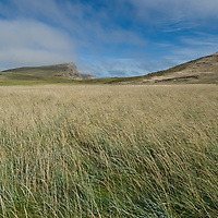 Grassy pastures sprawl across windswept New Island in Britain's Falkland Islands. The owners now fence sheep away from a nearby bird rookery.