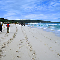 Cape to Cape Walk - 2020