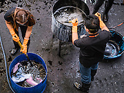 04 NOVEMBER 2016 - BANGKOK, THAILAND:  Volunteers stir vats of clothes being dyed black at Krungthai Tractor. About 150 volunteers are working at Krungthai Tractor in Bangkok to dye clothes black for people in mourning following the death of Bhumibol Adulyadej, the King of Thailand. The government declared a one year mourning period, during which Thais are encouraged to wear black and a 30 day mourning period during which Thais are very strongly encouraged to wear black. Furthermore, black is mandatory for official mourning functions, including visits to the Grand Palace and Sanam Luang, the public ceremonial ground across the street from the Palace. The expectation to wear black created a shortage of black clothes in many markets and Thailand's poor couldn't afford what black clothes were still available. Community groups have started dyeing clothes for people who either can't find or can't afford black clothes. The clothes dyeing volunteers at Krungthai Tractor were organized by Thai actress Chompoo Araya A. Hargate and Thai fashion blogger Chavaporn Laohapongchana.     PHOTO BY JACK KURTZ